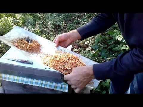 Bal arısı sonbahar bakımı ve kışa hazırlık-8 Kasım 2015