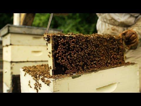 Hidden Bee Killers?