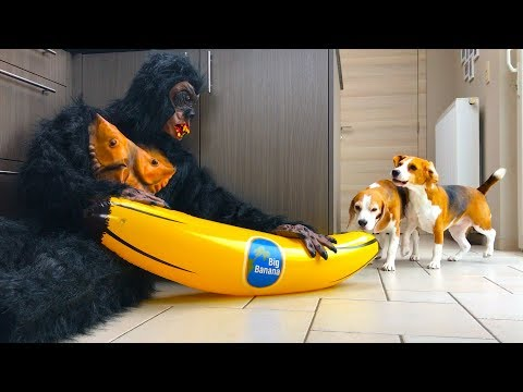 Giant Gorilla Pranks Dogs : Funny Dogs Louie & Marie