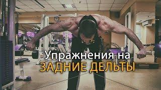 Как накачать заднюю дельту плеча: упражнения для тренажерного зала