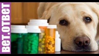 Проблемы печени из-за таблеток, возможно? ВетОтвет.