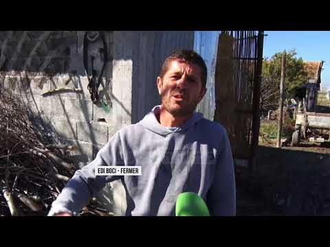 Domatet e dimrit, fermerët kërkojnë treg - Top Channel Albania - News - Lajme
