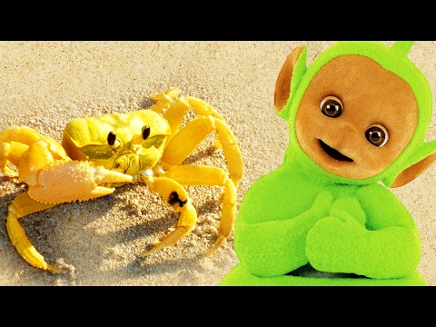 Teletubbies: Digging In Sand - Crabs | 134 | Cartoons for Children