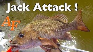 Jack Attack Mangrove Jack Fishing Mangrove Snapper Andy's Fish Video EP.328