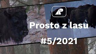 Prosto z lasu  05 2021 