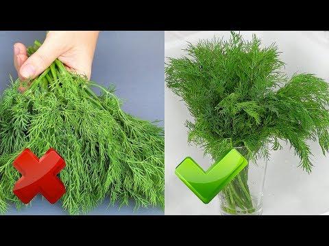 Как дольше сохранить зелень