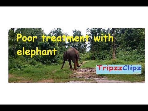 Poor treatment with Elephant, stop animal cruelity