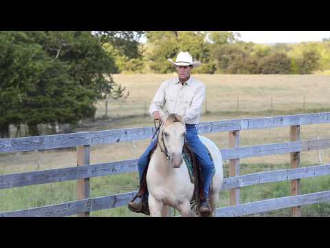 1. Bends And Counter Bends At A Walk (Flex Your Horse's Neck Left & Right While Walking The Rail)