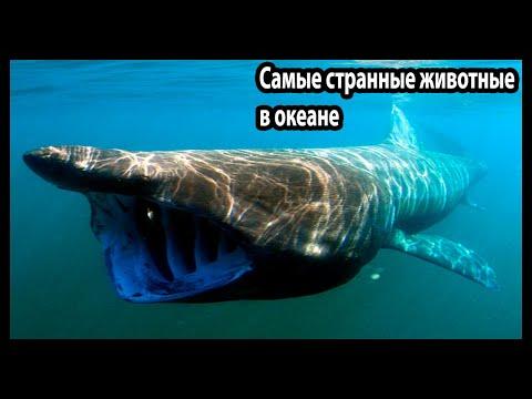 Самые странные в мире животные (В океане)