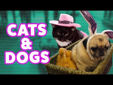 Try Not To Laugh Chllange - Funny Cat & Dog Compilation - Funny Video