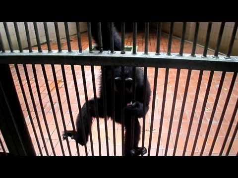 Pengunjung Di Serang Monyet Ragunan Kaget Banget