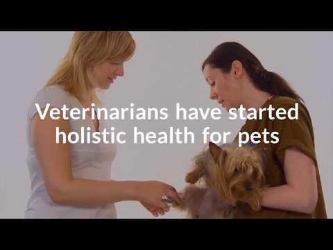 Holistic Treatment for Pets
