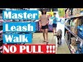 Teach Dogs NO Pulling on Leash. Real Life Training Works