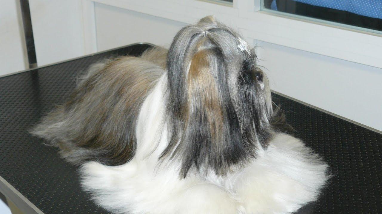 De perro vi - 2 6