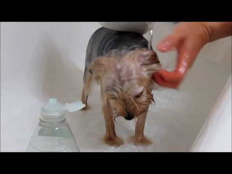 Bath time for Coco. 2- 19-17