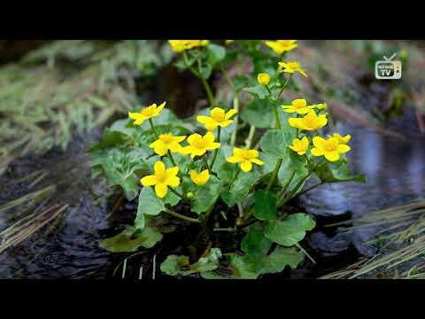 Лучшие растения для сырых мест - интернет-магазин Хитсад