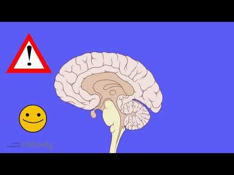 tinnitus:-your-brain-is-ringing