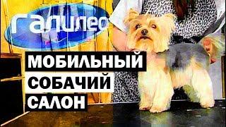 Галилео. Собачий мобильный салон 🐶 Mobile dog grooming