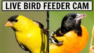 LIVE Bird Feeder Cam in Ohio (over 30 species seen in 2021)