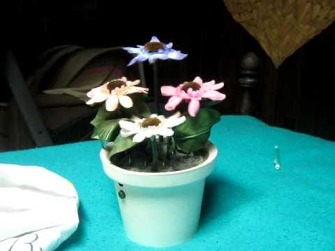 Dancing Flower Pot Youtube