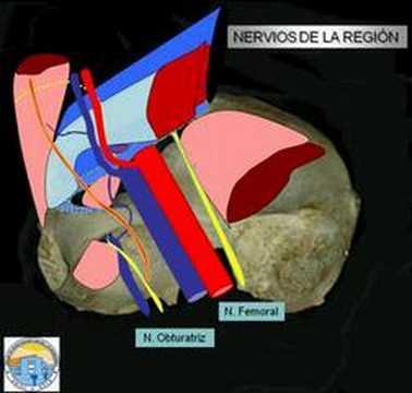 Anatomía de la región inguinal. - YouTube