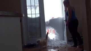 「ごはんだにゃ!」エサ欲しさに雪の壁を破壊する猫