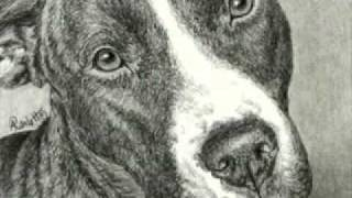 """devotion"" - Drawing Of A Pit Bull Terrier"
