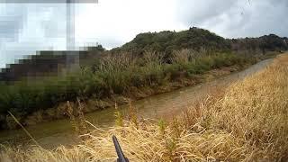 【河川でのカモ撃ち】フルチョーク・7.5号弾使用 狩猟夫婦chu&ituko htt...