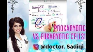 BASICS OF PROKARYOTIC AND EUCARKOTYIC CELLS EXPLAINED UNDER 7 MINUTES!!!