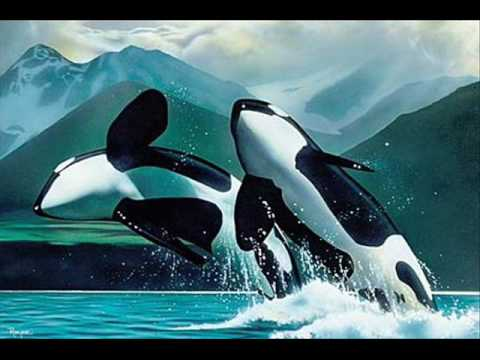 Whale tribute orcas killer whale free willy youtube whale tribute orcas killer whale free willy voltagebd Gallery