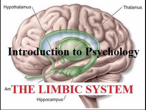Introduction to Psychology | The Limbic System