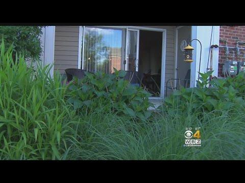 Dog Kills Cat In Vicious Attack At Dedham Apartment complex.