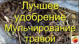 Удобрение Знай Правильное мульчирование травой Повышение Урожая Здоровья растений fertilizer Mulchin