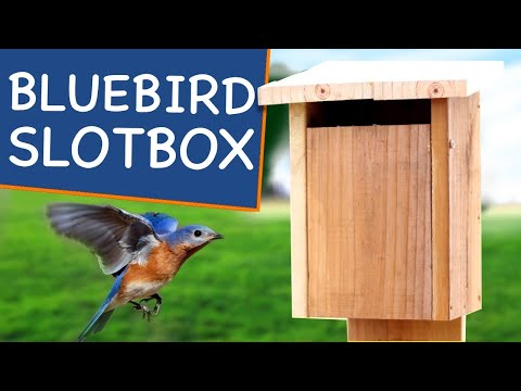 How to Make a Slot Entry Birdhouse🐥! Not Your Grandpa's Bluebird House Plans!
