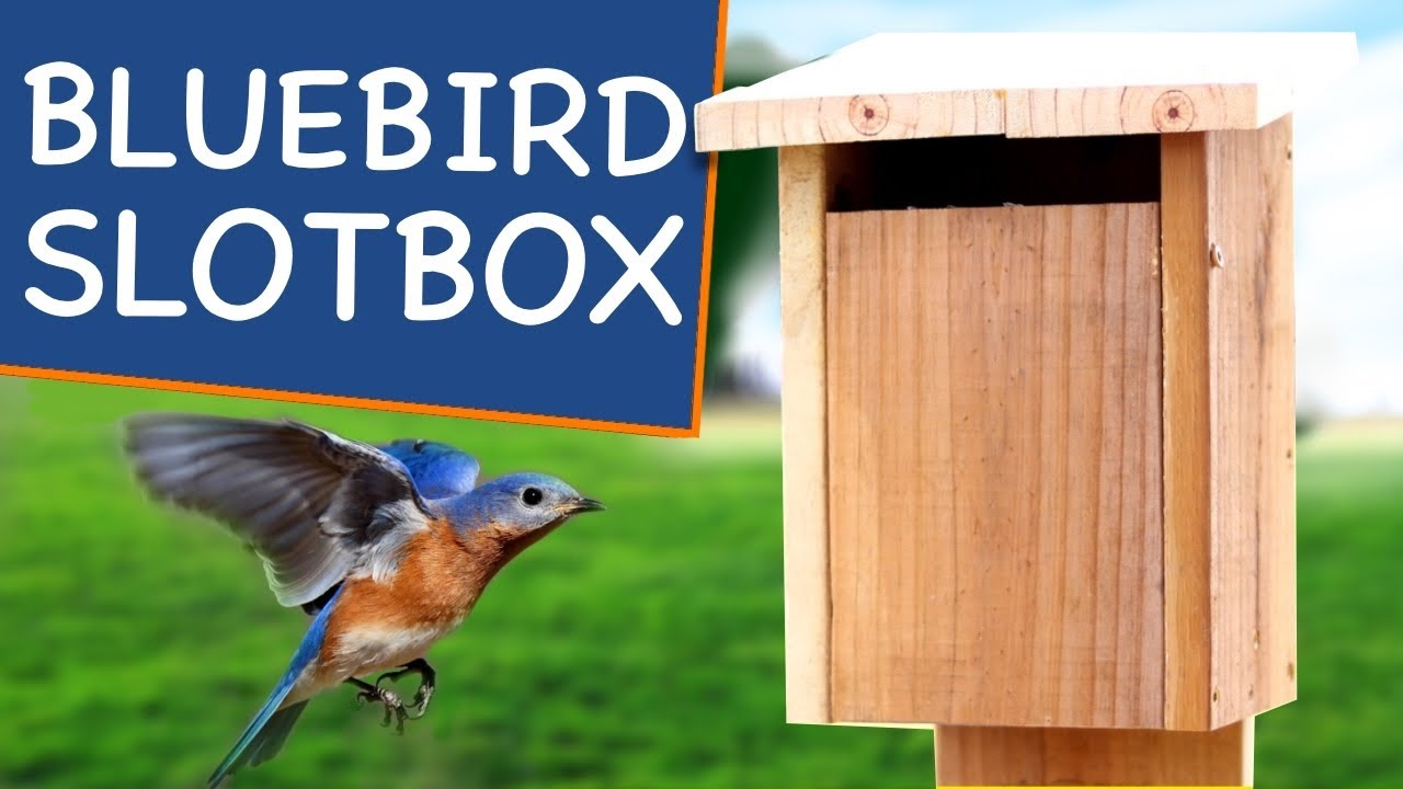 How to Build a Bluebird House with Slot Entry🐥! Not Your Grandpa's Bird House Plans on dog house plans, bunk bed plans, deck plans, residential home design plans, jewelry box plans, bird food, desk plans, picnic table plans, shed plans, bird nest, bookcase plans, coffee table plans, bench plans, bed plans, greenhouse plans, wood plans, church birdhouse plans, computer desk plans, bird feeders, bird silhouette, bird cage, bird houses to build, bird houses for doves, table plans, gazebo plans, bird houses for sparrows, chicken coop plans, porch swing plans, headboard plans, rocking horse plans, loft bed plans, arbor plans, router table plans,