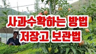사과수확하는방법 및저장…