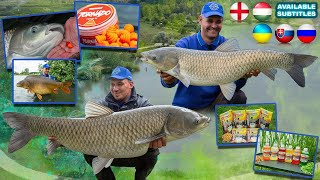 Summer Feeder Adventures part 5. Grass Carp of Mátravíz