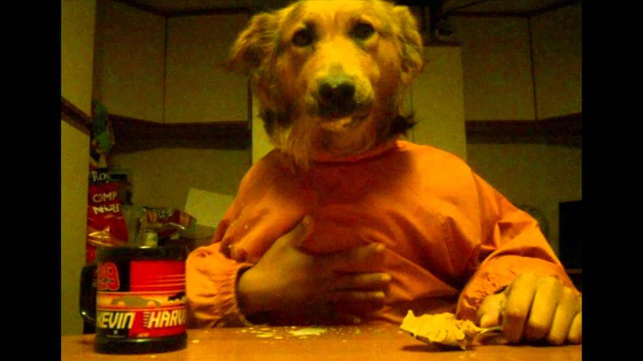 Dog with human hands - photo#51