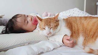 아기의 애착고양이가 된 노래 (아기와 고양이의 우정)