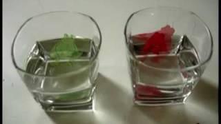 11.1. Живая еда. (1 из 3) .mp4