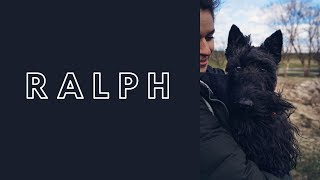 Scottish Terrier 'Ralph' | Awesome Obedience | Amazing Transformation