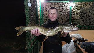 Подводная охота и рыбалка на спиннинг в один день Подводная охота осенью Ночная подводная охота