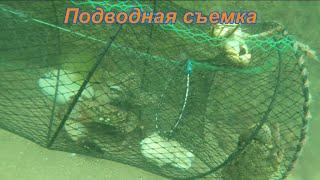 Много крупного краба Ловля крабов рыбы на ловушки Черное море Абхазия Как ловить крабов на море