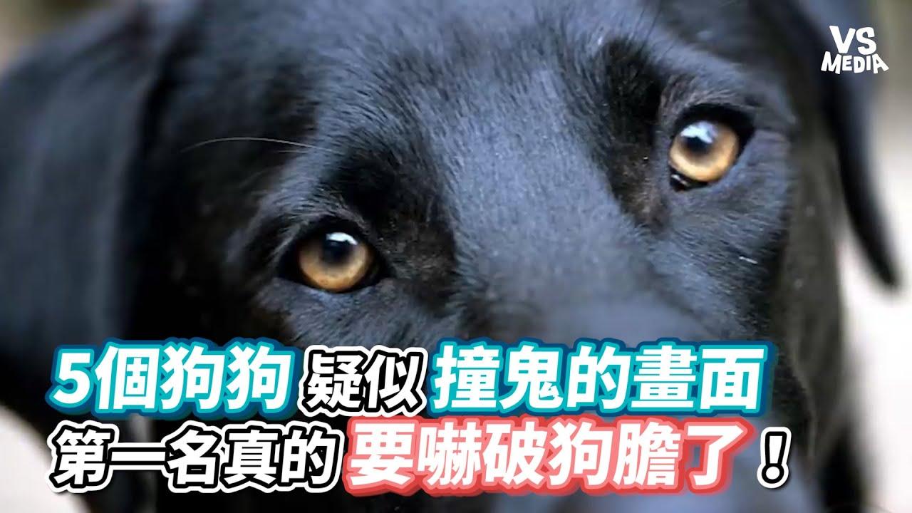 5個狗狗疑似撞鬼的畫面 第一名真的要嚇破狗膽了!《VS MEDIA》