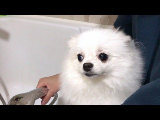 공포의 목욕