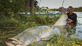 Pescatore Combatte un Siluro Mostruoso in Spinning - HD by Catfishing World