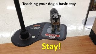 Teaching Your Dog A Basic Stay
