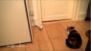 Кот ужасы прикол смешно угар котик носок до слез ржака
