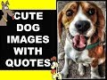 Best quotes about dogs/Cute dog images with quotes