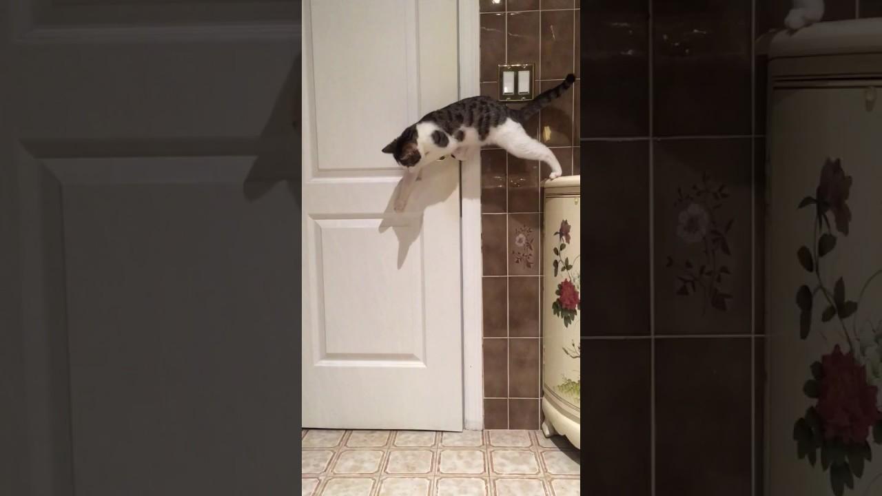 Cat Not Finishing Food